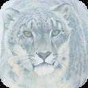snow-leopardII.png