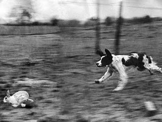 Dog chase rabbit