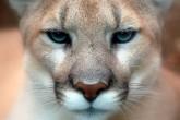 ¿Mountain Lion?, ¿Por qué ahora?