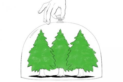 Apple y Proteccion de Bosques