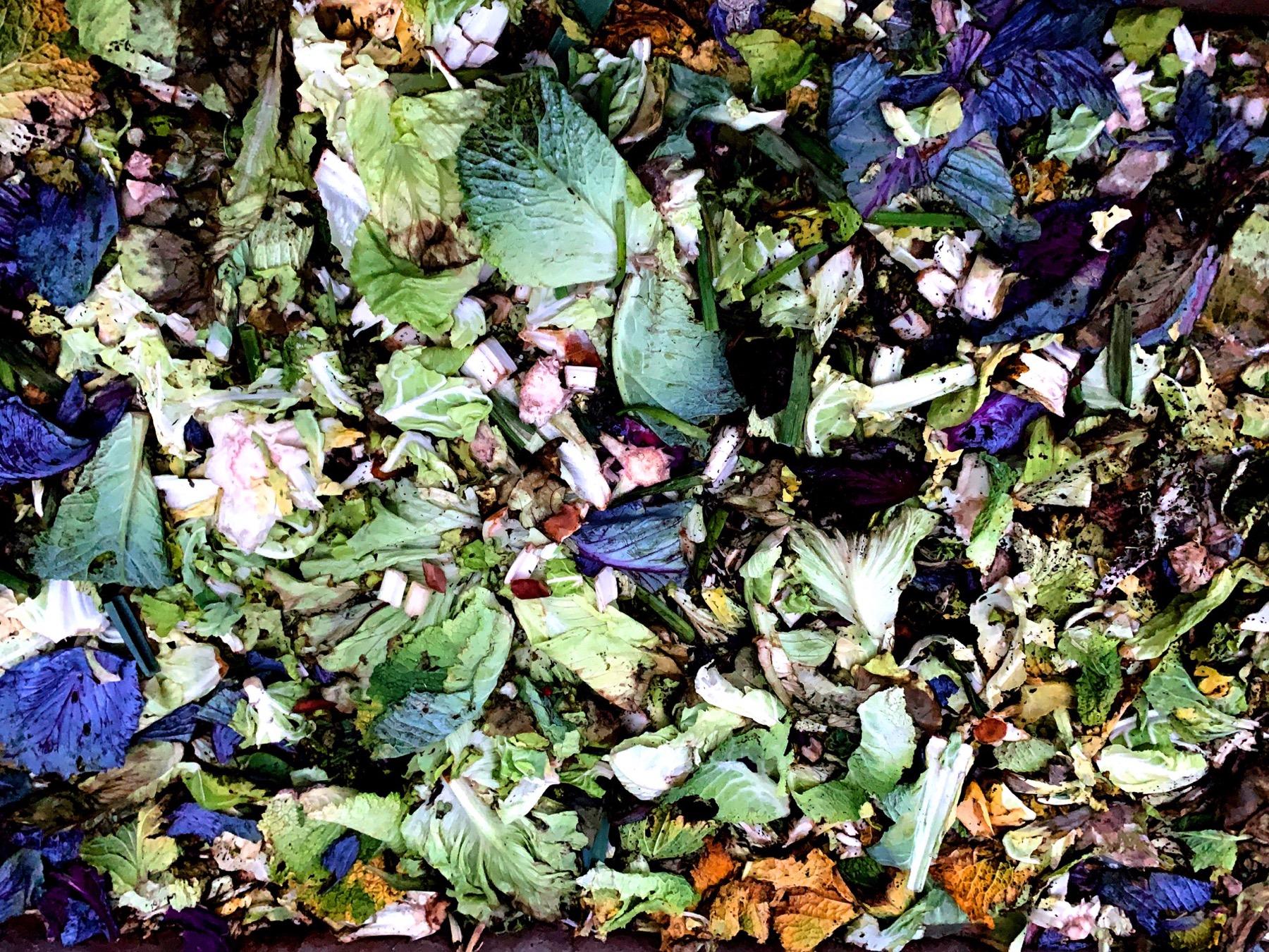 Compost fotografiado con la camara del iPhone XR a través de la app HDR